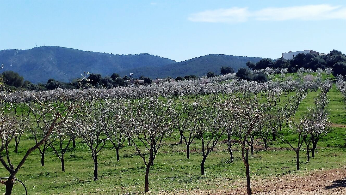 almond trees behind the lodge